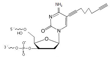 C8-Alkyne-dC