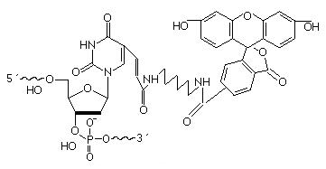 Fluorescein-dT