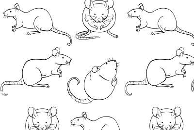 qPCR assays for rat reference genes