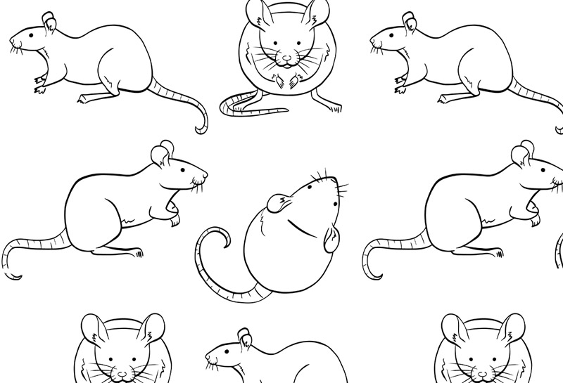 qPCR assays for rat reference genes
