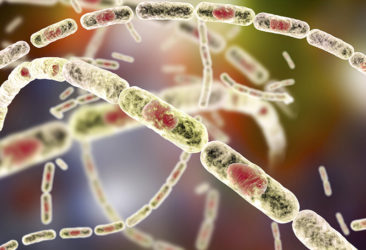 gb MICRO Bacillus anthracis (csaA)