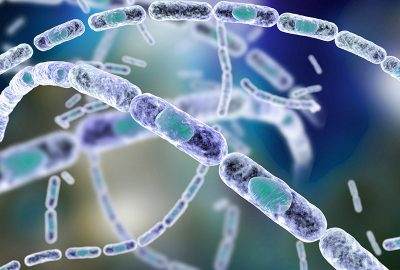 gb MICRO Bacillus anthracis (pXO1)
