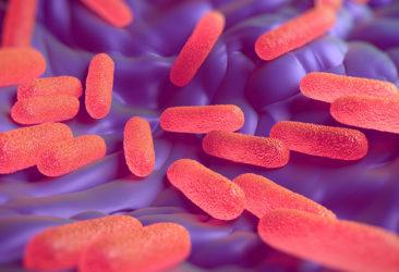 gb MICRO Salmonella enterica