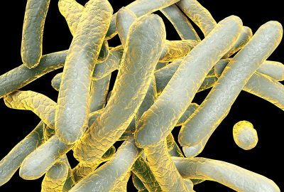 gb MICRO Mycobacterium tuberculosis