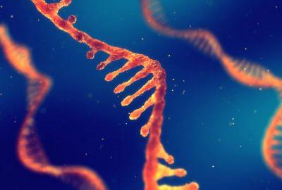 gb Human B2M mRNA