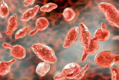 Mycoplasma detection – qualitative PCR